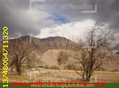 www.shutterbugsparadise.com